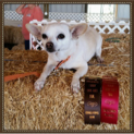 dog2_blog_spp