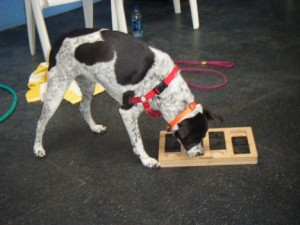 dog_nose_ssp
