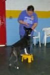stool_dog_ssp